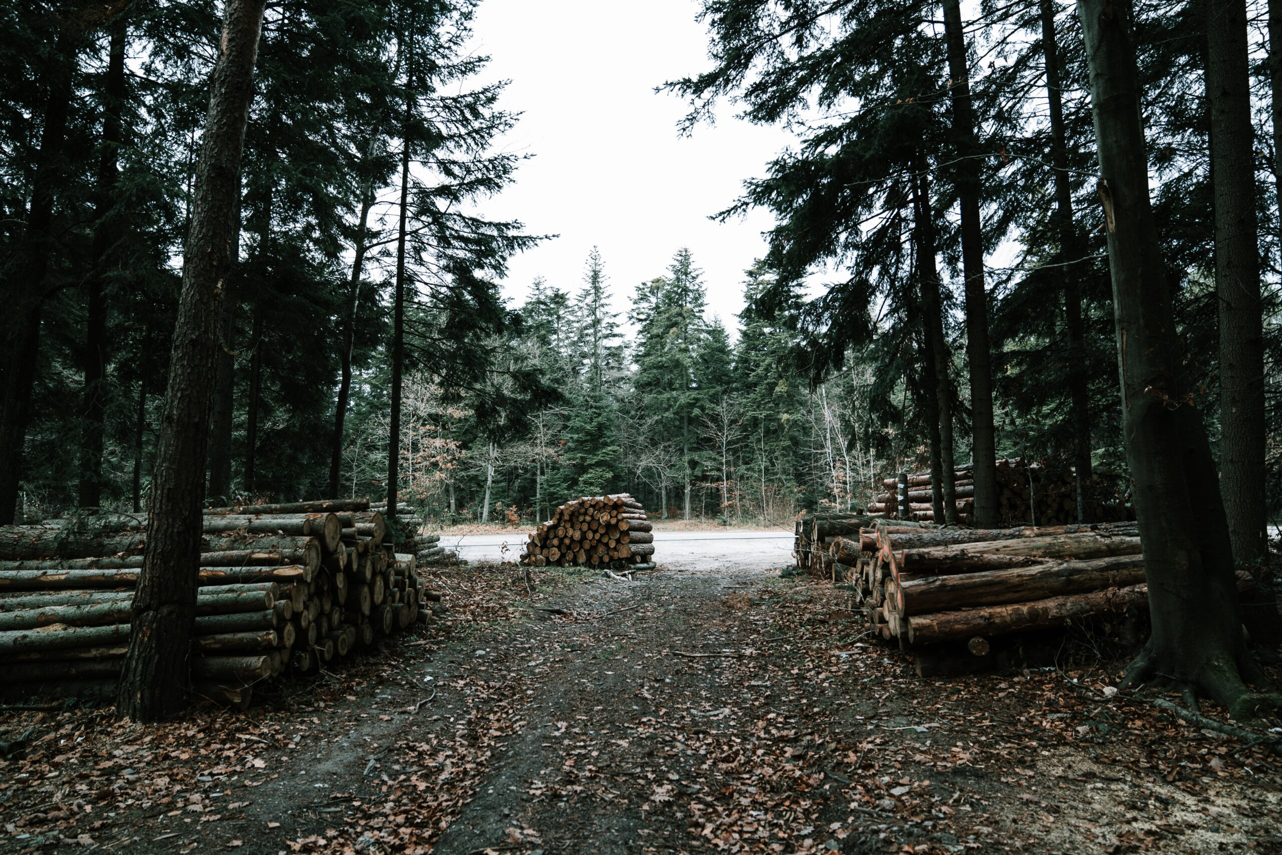 Lumber in Piles by trees